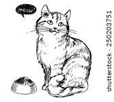 Cat  Vector Illustration  Hand...