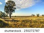 Dry Parched Outback Landscape