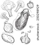 vegetable medley sketches | Shutterstock .eps vector #250298929