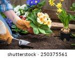 Gardener Planting Flowers In...