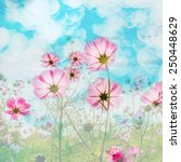 abstract. sweet color cosmos... | Shutterstock . vector #250448629