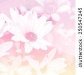 beautiful flowers in sun blure... | Shutterstock . vector #250547245
