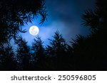 Moon Rising Among Bamboo Trees