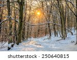 Winter Forest Sunset. Bavarian...