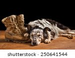 border collie australian... | Shutterstock . vector #250641544