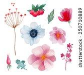 watercolor flowers elements set....   Shutterstock .eps vector #250710889