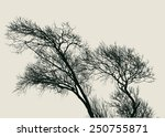 silhouette of old willow trees. ... | Shutterstock .eps vector #250755871