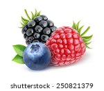 isolated berries. blueberry ... | Shutterstock . vector #250821379
