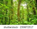 rein forest background  fresh... | Shutterstock . vector #250872517