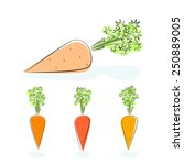 carrot  three kinds of carrots... | Shutterstock .eps vector #250889005