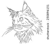 Maine Coon Cat Portrait. Hand...