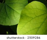 green leaves with focussed... | Shutterstock . vector #2509286