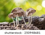Mushroom With Blur Background