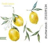 lemon  watercolor   fruit   ... | Shutterstock .eps vector #251039134