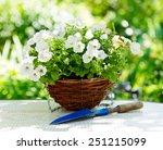 Petunia Flowers In A Garden