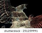 ottawa  ontario  canada  ... | Shutterstock . vector #251259991