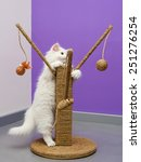 Stock photo white persian cat playing with the scratching climber tree 251276254