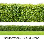 Green Hedge Or Green Leaves...