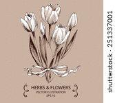White Tulips. Hand Drawn Vector ...