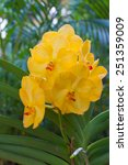 Small photo of Yellow vanda orchid