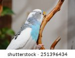 Budgerigar Perched On Branch...