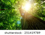 forest trees. nature green wood ... | Shutterstock . vector #251419789