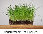 young seedlings of leeks        ... | Shutterstock . vector #251421097