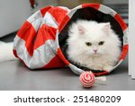 Stock photo white persian cat playing with toys 251480209