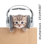 Stock photo funny kitten cat in headphones in cardboard box 251494387