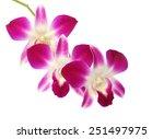beautiful orchid flowers... | Shutterstock . vector #251497975