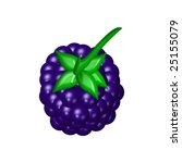 blackberry | Shutterstock . vector #25155079