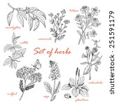 Set Of Isolated Herbs In Sketc...