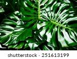 Philodendron Monstera Obliqua ...