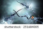 high quality 3d render of nerve ... | Shutterstock . vector #251684005