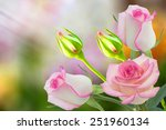 Stock photo beautiful pink rose in a garden 251960134