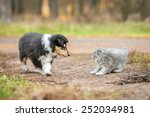 Stock photo little kitten playing with rough collie puppy 252034981
