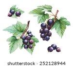 Watercolor Black Currants...