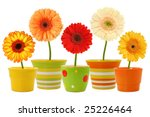 Flowers In Pots Isolated On...