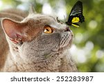Stock photo colorful butterfly sitting on cat s nose on green natural background 252283987