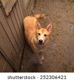 Red Dog Standing On Muddy Ground