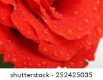 water drops on rose petals ... | Shutterstock . vector #252425035
