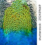 Peacock Feathers Texture