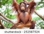 orangutan cute | Shutterstock . vector #252587524
