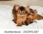cute somali kitten portrait... | Shutterstock . vector #252591187