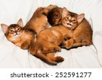 Stock photo three cute kittens lying on white bed and looking at camera 252591277