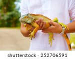 Stock photo young man herpetologist holding colorful iguana reptile 252706591