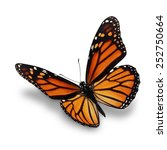 Stock photo beautiful monarch butterfly isolated on white background 252750664