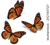 Stock photo three monarch butterfly isolated on white background 252765727