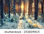 Stock photo winter forest landscape sun rays 252839815