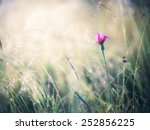 summer meadow | Shutterstock . vector #252856225
